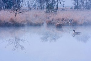 JOWA-birds (02)