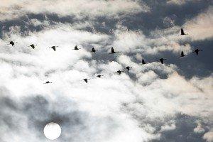 JOWA-birds (13)