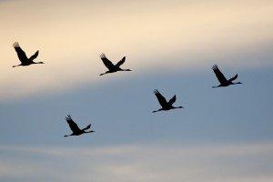 JOWA-birds (14)