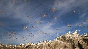 JOWA-birds (20)
