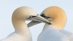 JOWA-birds (23)