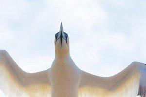 JOWA-birds (24)
