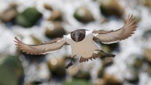 JOWA-birds (31)