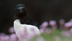 JOWA-birds (33)