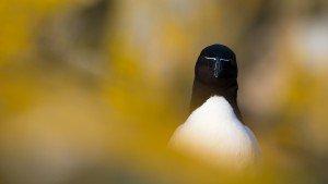 JOWA-birds (34)