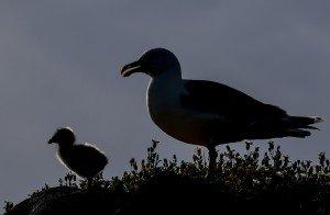 JOWA-birds (35)