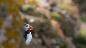 JOWA-birds (45)