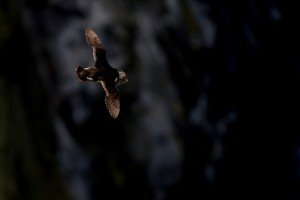 JOWA-birds (47)