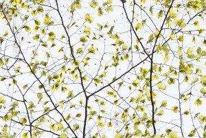 JOWA-trees (01)