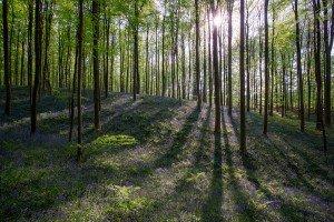 JOWA-trees (08)