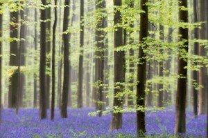 JOWA-trees (10)