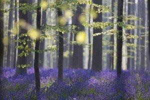 JOWA-trees (11)