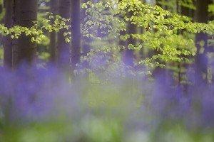 JOWA-trees (13)