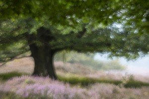 JOWA-trees (20)