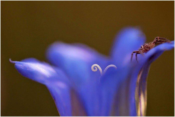 blog WS08-flora- (9)